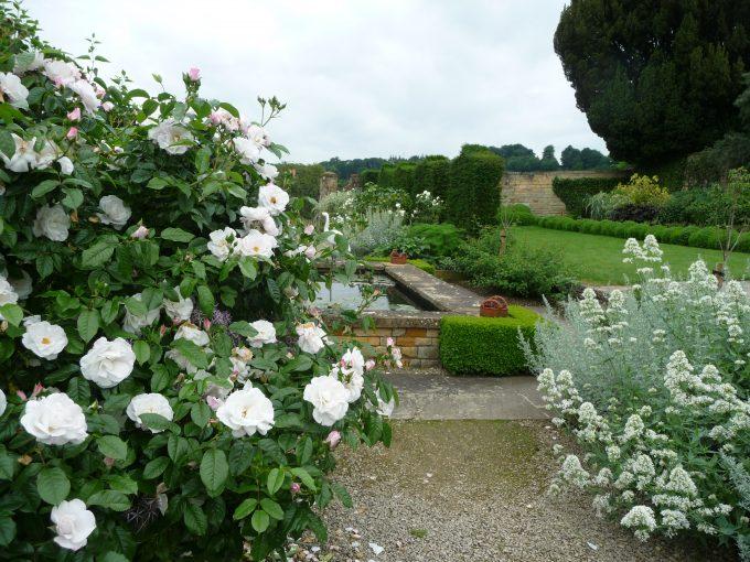 Roses in the White Garden